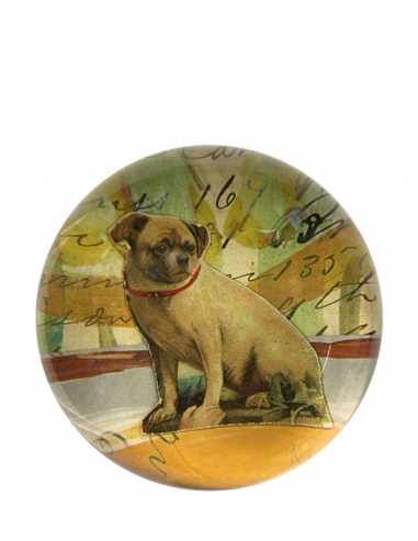 """""""Pug"""" Dome Paperweight"""