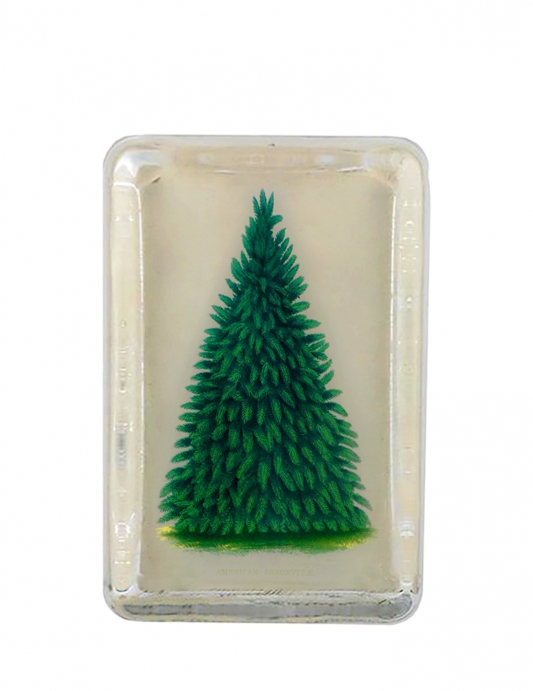 """Pisapapeles Rectangular """"Arbor Vitae"""""""
