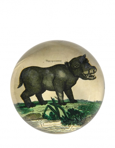 """Happy Hippo"" Dome Paperweight"